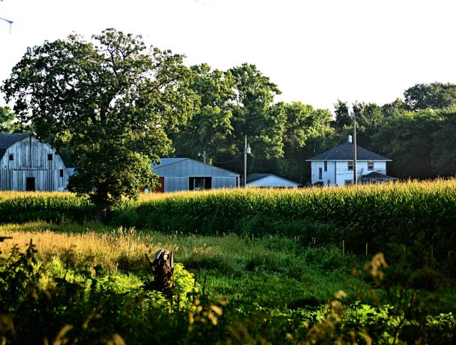 a farmplace in summer